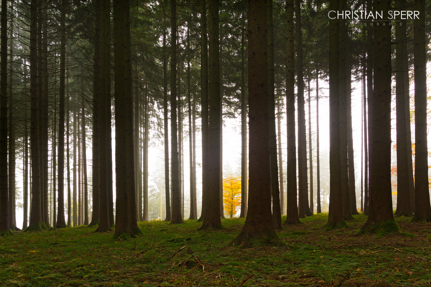 sperr-landscapes-01-10