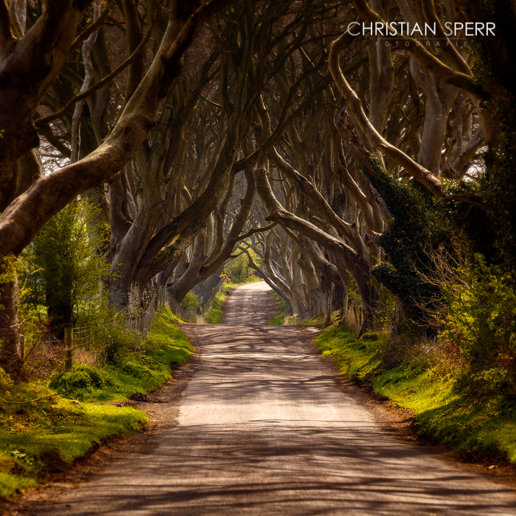 christian-sperr-dark-hedges-001