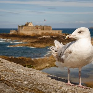 Saint-Malo; Fort National